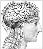 Sports-Related Brain Injury: It's not about the helmet.