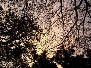Tree India