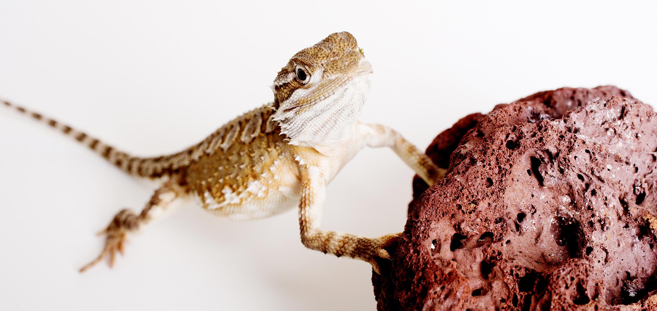 Tierfotografie, Tierfoto