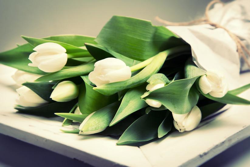 Tulpen_3_Fotor Hintergrund.jpg