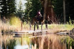 Salt Creek Ranch Mule