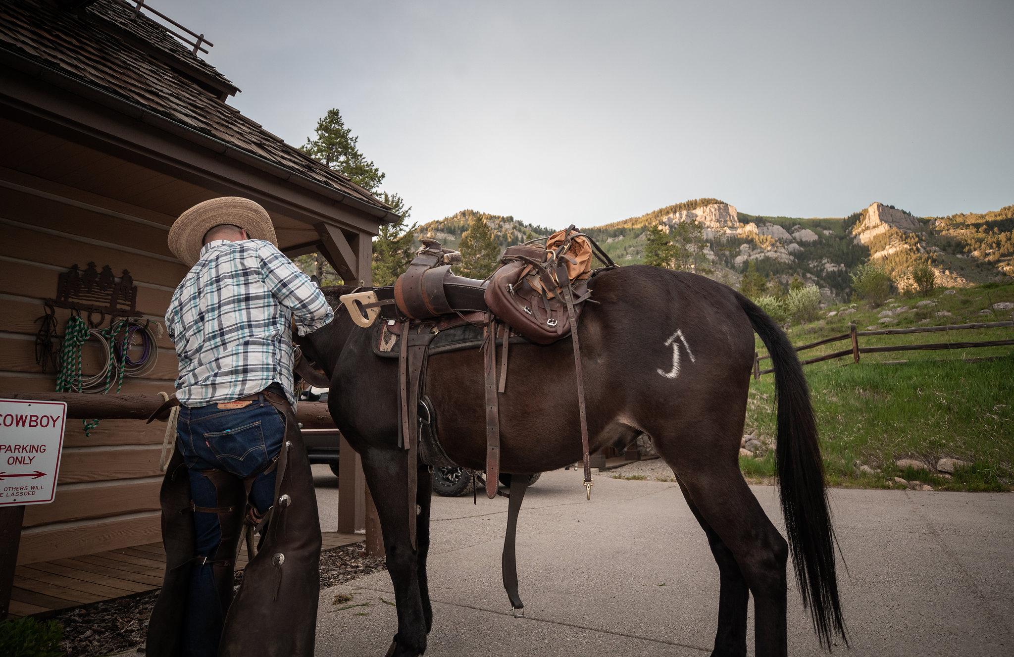 Miller Ranch Mule