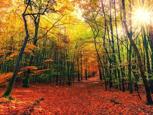 Respirar con los ojos: Como la naturaleza te puede ayudar a mejorar la visión.