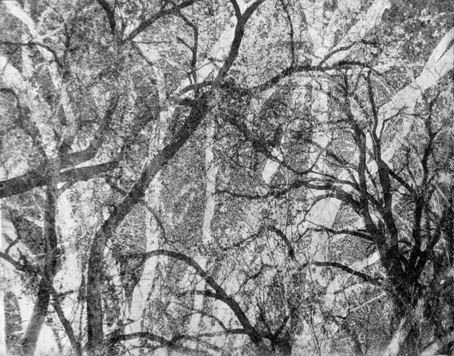 arching trees 1_edited-1.jpg