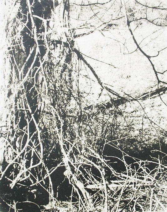 bosque textures 1.jpg