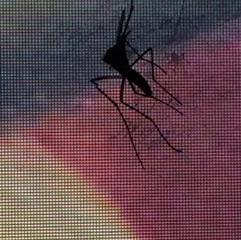 Tri-Colored Bug