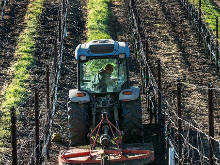 """How One """"Boss Lady"""" and Her Team is Changing the Way Sonoma County Grows Grapes"""