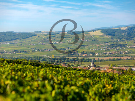 """""""You Can Drink Burgundy for Fun"""" - Discovering the """"Drink Now"""" Wines of Bourgogne"""