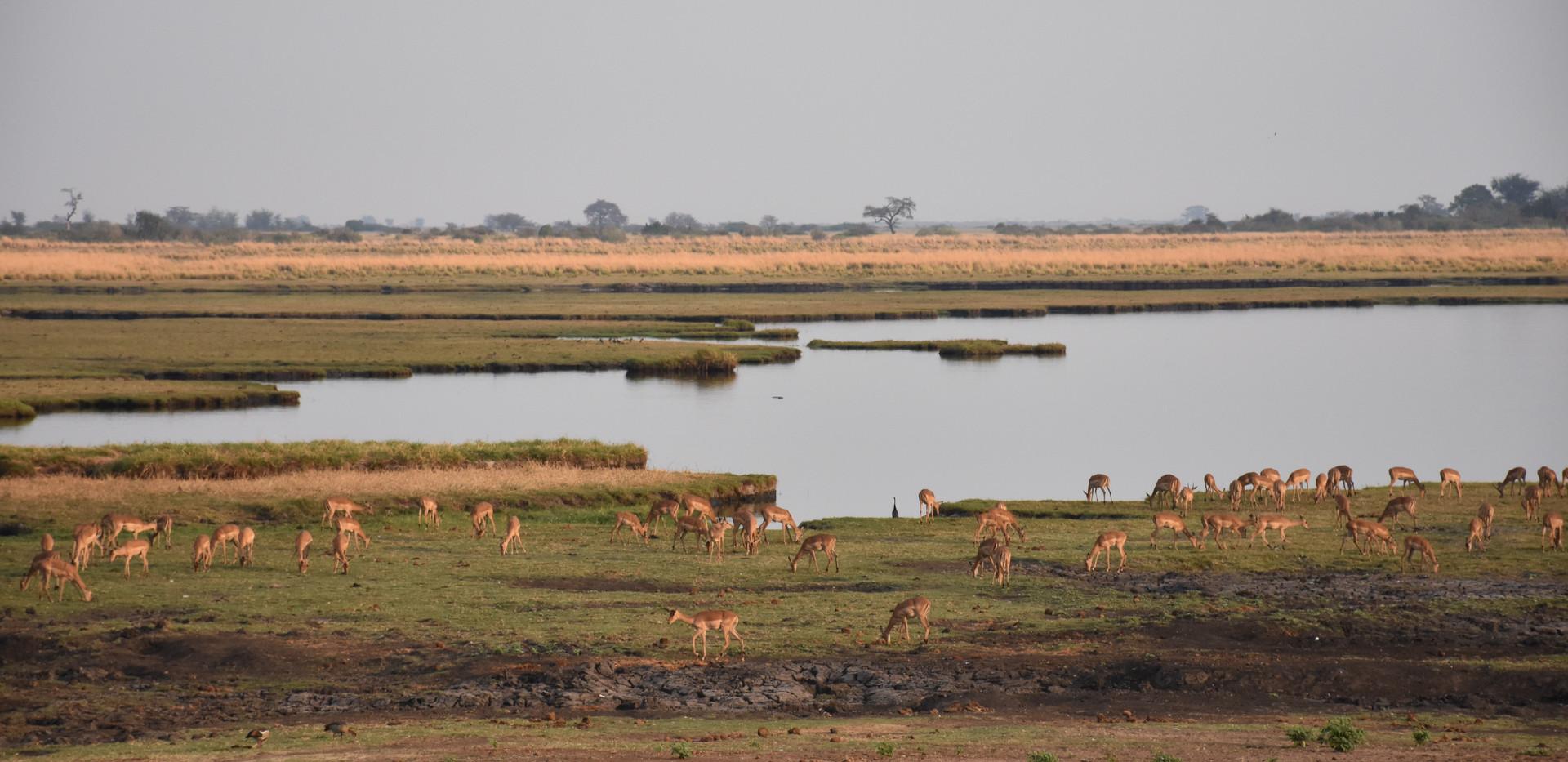 Chobe River view