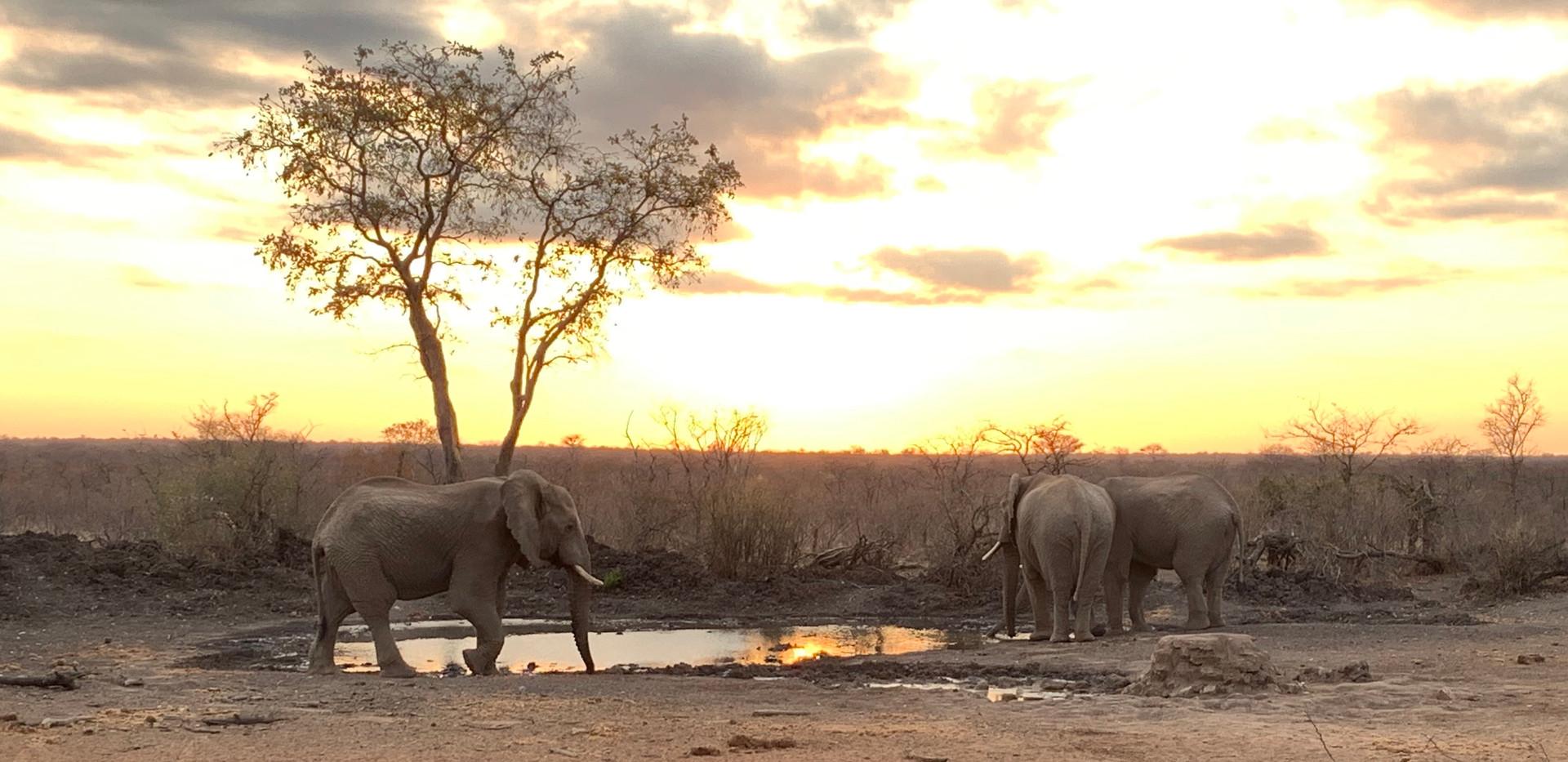 Limpopo Lipadi Private Game and Wilderness Reserve