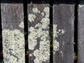 How to Remove Mold from Wooden Furniture, Cabinets, and Decks
