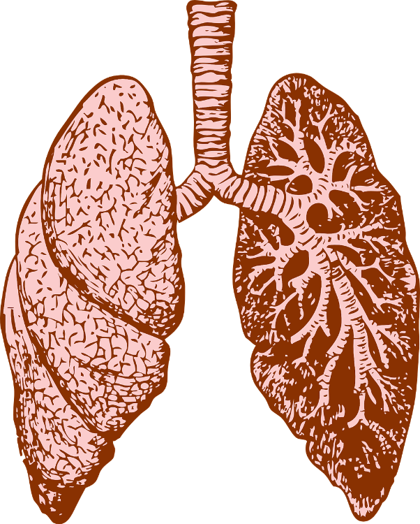 why is mold harmful to our respiratory system?