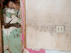 DIY Mold Removal: Is It A Good Idea?