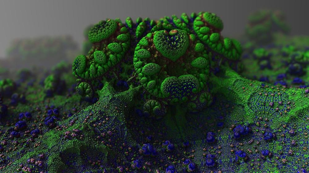mold growth, how does mold grow
