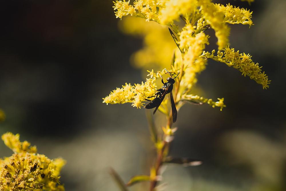 how to avoid allergies in spring, springtime allergies