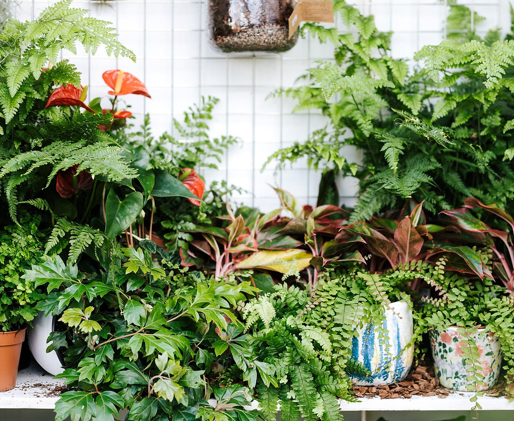 is mold on houseplants dangerous? Why is there mold on my potted plants?