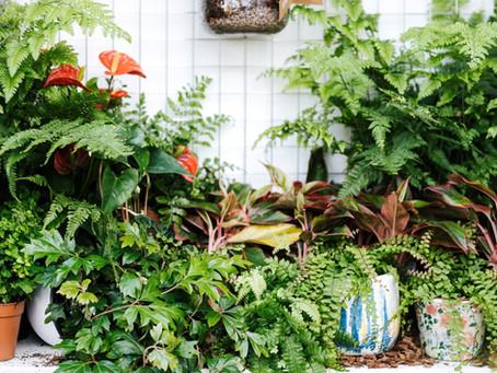Is Mold on Houseplants Dangerous to Humans?