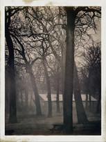 South Island Trees (S. Island Park, Wilmington, Illinois)