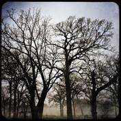 Island Park Trees (N. Island Park, Wilmington, Illinois)