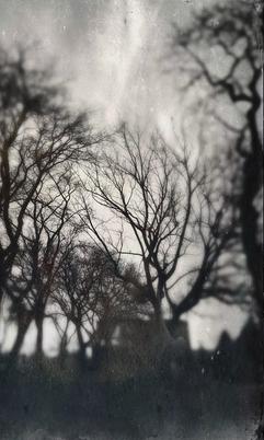 Resurrection Trees no.1 (Chicago, Illinois)