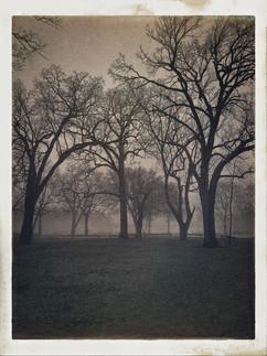 North Island Trees (N. Island Park, Wilmington, Illinois)