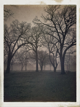 North Island Trees (N. Island Park, Wilmington, Illinois)