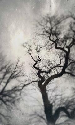 Resurrection Trees no.3 (Chicago, Illinois)