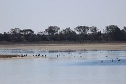 Lake Hawthorn 2014_2503 (12)