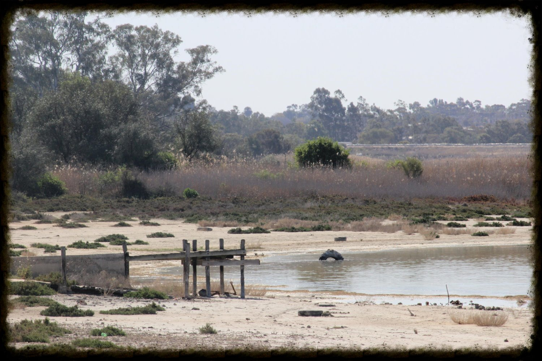 Lake Hawthorn 2014_2503 (14)