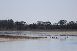 Lake Hawthorn 2014_2503 (13)