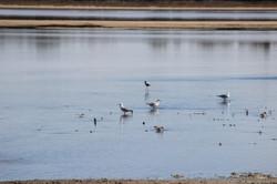 Lake Hawthorn Env Water 2016 (12)