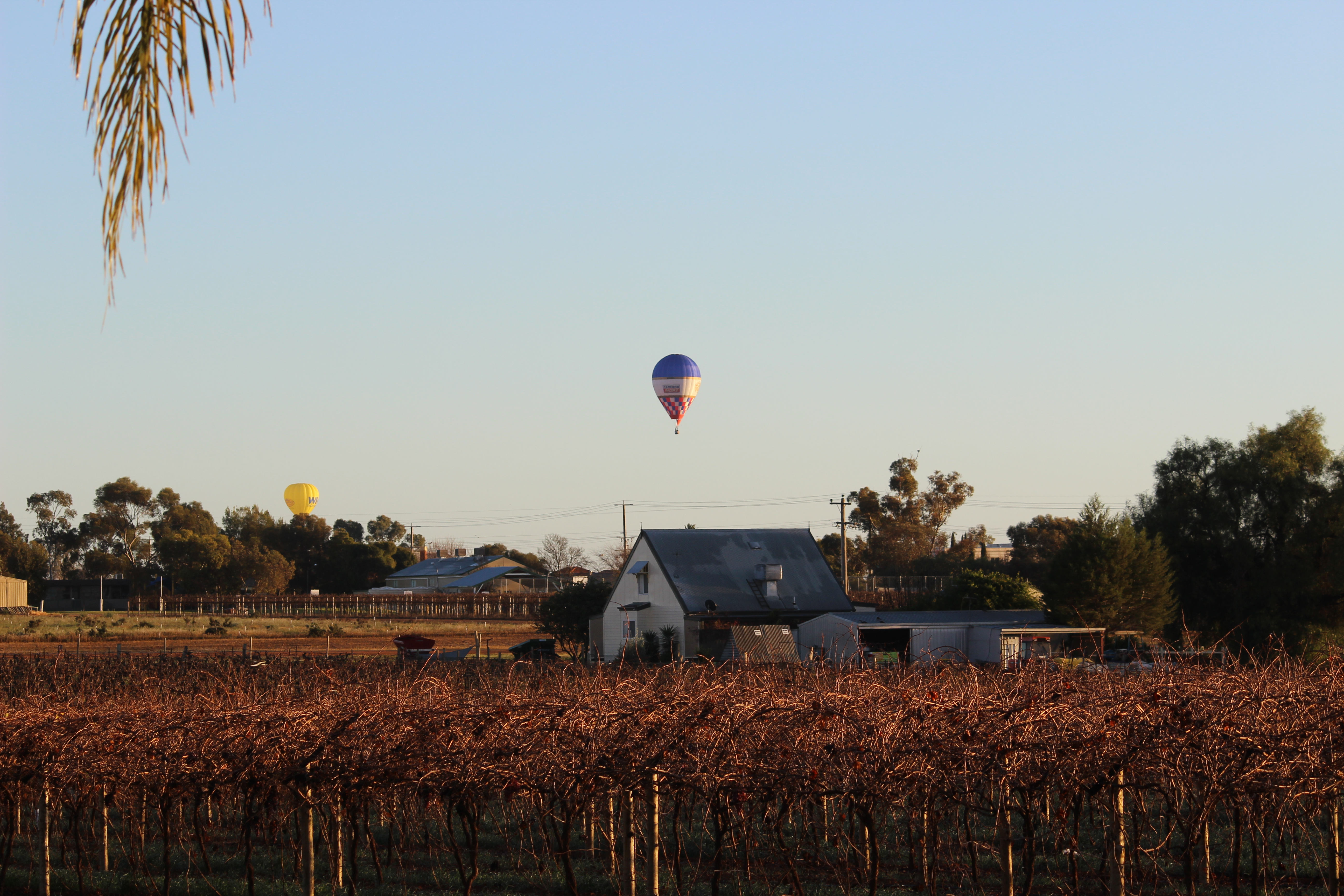 Cabarita hot air balloon festival