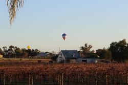 Cabarita hot air balloon festival
