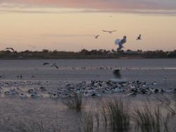 Lake Hawthorn_5701 (2).JPG