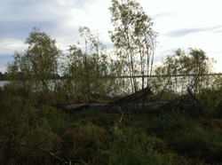 Cabarita & Lake Hawthorn trails