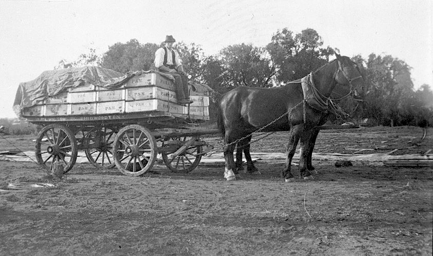 1920 Dried Fruit delivery
