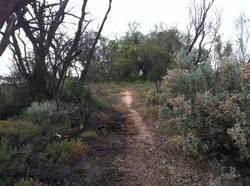 Cabarita walking trail