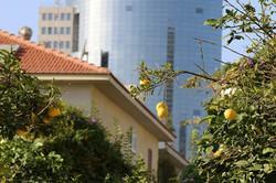 Tel Aviv-Rotschild Blvd