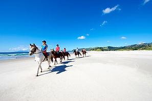 Pakiri Beach Horse Rides_78025.jpg