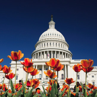 capitol_building_tulips.jpg