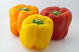 Bell peppers_02-08-2021.jpg