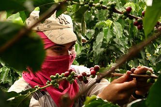 colombia-coffee-tours.jpg