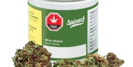 SPINACH WHITE WIDOW 3.5 Grams