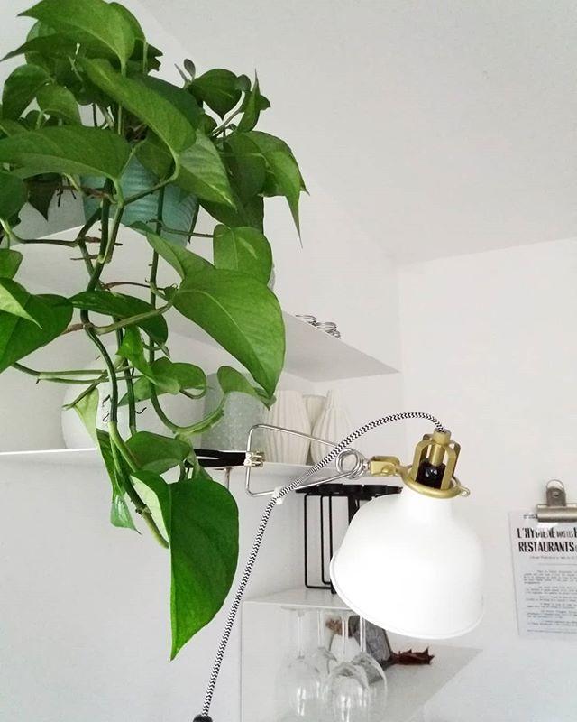 Cette envie de nouvelles plantes vertes