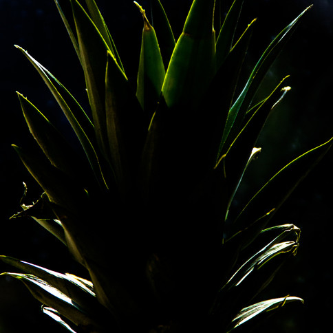 Backlit Pineapple