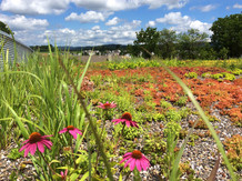 Forks Township Public Works Greenroof