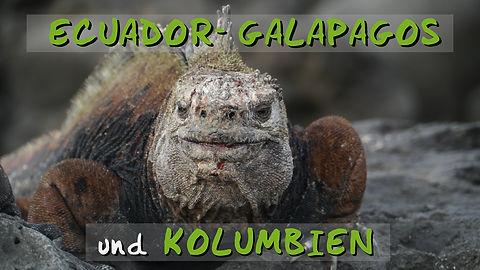 GEK_Iguana.jpg