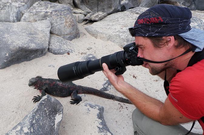 Galapagos Iguana Espanola
