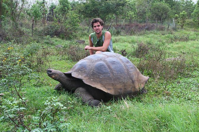 Riesenschildkröte Galapagos