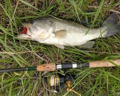 Largemouth Bass Big Bad Bass Test Fly 20 inches/ 5-6 pounds Kansas Farm Pond